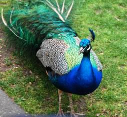 Victoria Peacock