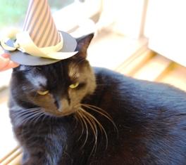 RuRu's Hat