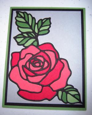 Rose Wonder