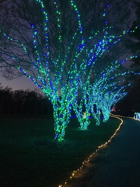 Blue & Green Trees