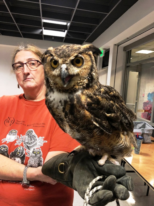 Great Horned Owl w Dana