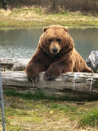 Alaskan-Bear-and-Wildlife-final-small