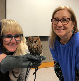 Tiny screech owl