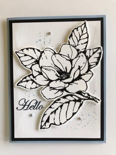 Magnolia  with sparkling black ep