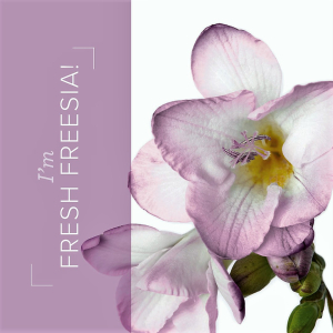 03.21_SHAREABLE1_FREESIA_IN_COLORS_EN (2)